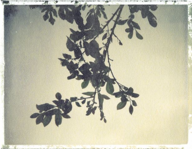 Image printed by the alternative developing process of polaroid transfer by Emma Starr