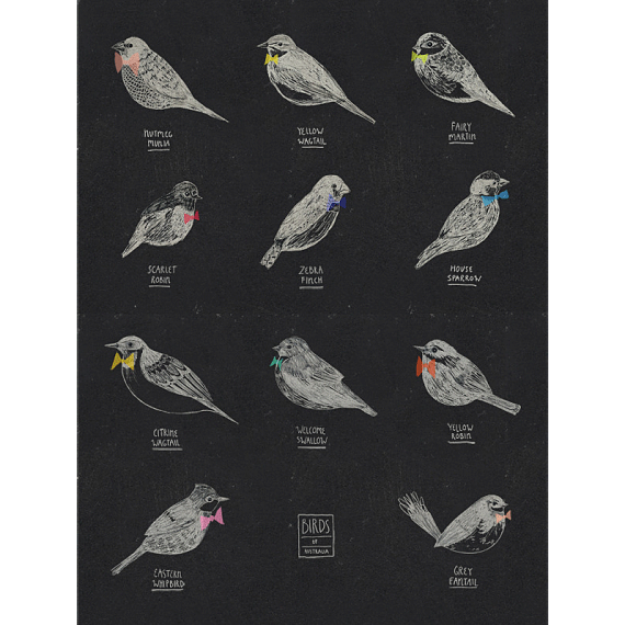 Birds of Australia A4 Print by Amy Borrell